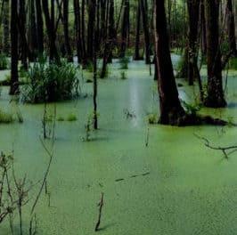 Washington D.C. Swamp: Deep, Dark, and Nasty